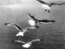 THE BIRDS (1963) - PHOTOGRAPH - Photograph from the footage used to create the matte images of the birds (''The Birds'').